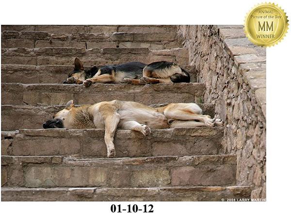 http://www.ellemmphotography.com/Images/Misc/APOTD_dogs.jpg