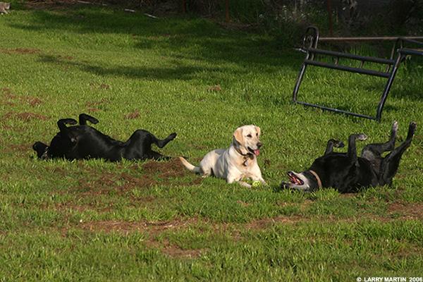 http://www.ellemmphotography.com/Images/Misc/Dogs_1008_web.jpg