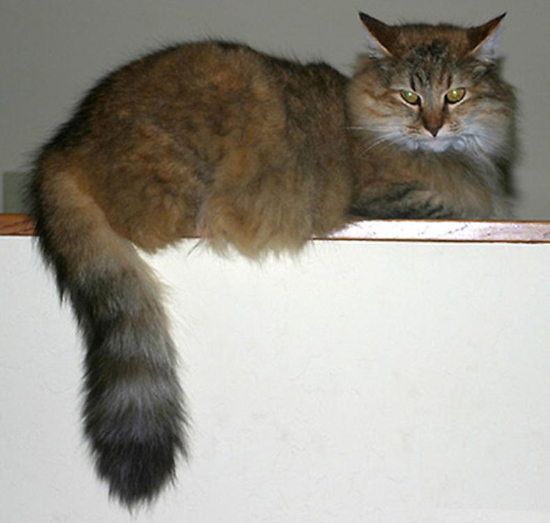 http://www.ellemmphotography.com/Images/Nature/Pets/Elsie_01.jpg